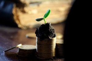 צמח צומח על מטבעות