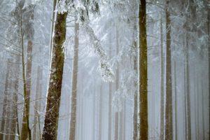 היער השחור ראשית